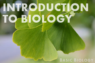 Introduction to biology