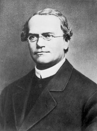 Gregor Mendel studied genetic inheritance in peas