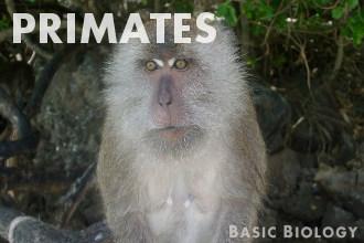 Primates | Mammals