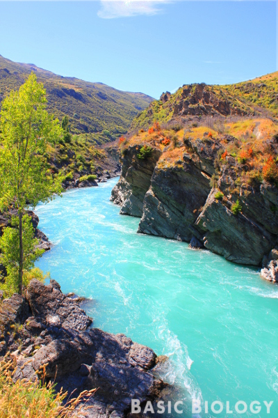 Rivers Basic Biology - Importance of rivers