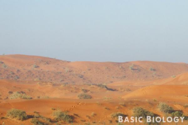 Ras-al-khaimah desert