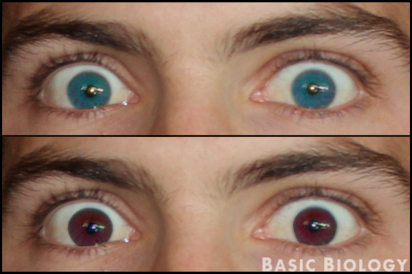 Eye color - introduction to genetics